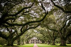 The most beautiful and historic place we have ever gotten to photograph. Oak Alley Plantation had more history in the trees than one could ever imagine to see in a lifetime.  Photography by Brittany Louisana Weddings #oakalleyplantation #history #learnfromthepast