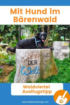 Kind Und Kegel, Camping, Dogs, Outdoors, Europe, Destinations, Vacation Travel, Nature Pictures, Travel Report