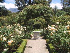 Rose Garden | rose_garden