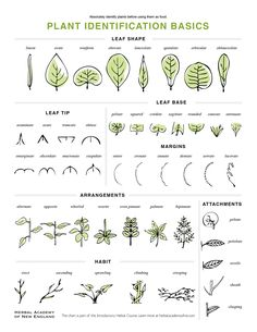 Great infographic when identifying plants.