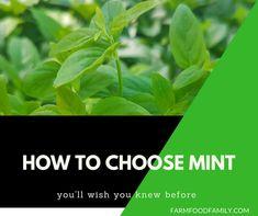 Five Ideas For Your Vertical Herb Garden Mint Garden, Herb Garden, Garden Fun, Garden Ideas, Growing Catnip, Growing Mint, Flower Bed Designs, Pineapple Planting, Mint Plants