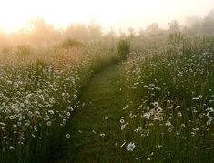 Oh, to have a lovely wildflower meadow with grassy paths meandering in between…