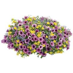 Proven Winners 10 in. Bahama Beach Combination Hanging Basket, Live Plants, Yellow, Blue, and Purple Flowers Hanging Baskets, Hanging Plants, Indoor Plants, Cactus Flower, Flower Pots, Flowers Garden, Flower Ideas, Square Above Ground Pool, Solar Fairy House