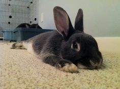 #bunnies #ears #naps