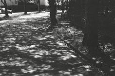 木漏れ日 (The sunlight)
