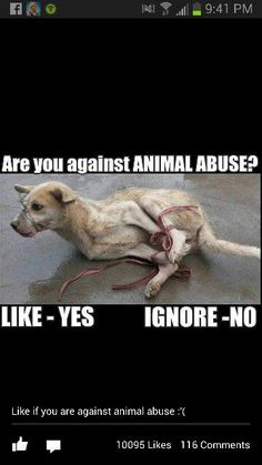 whoever abuses animals should die | Animals | Pinterest | Animals, Don't Care and Dogs