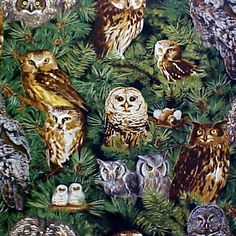 Fabric Bulletin Board, Cork Bulletin Boards, Fabric Wall Art, Owl Fabric, Fabric Corkboard, Wall Art Pictures, Fabric Covered, Bird Feathers, Picture Wall