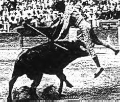 Islero, the bull that killed Manolete