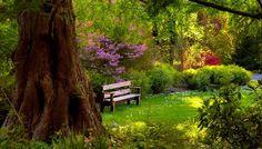Il giardino Alzheimer