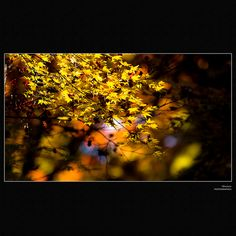 Autumn colours of Japan - 101127 by Obacyan, via Flickr. S)