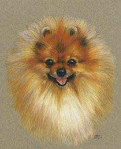 Delightful Comical And Sweet Pomeranian Ideas. Charming Comical And Sweet Pomeranian Ideas. Animals Watercolor, Pomes, Save A Dog, Cute Animal Drawings, Pomeranian Puppy, Animal Paintings, Dog Art, Pet Portraits, Dog Life