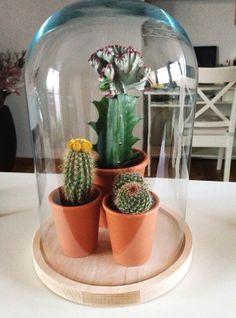 Cactus in een stolp <3