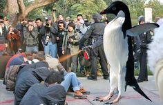 When Penguins Attack Seo Articles, Online Marketing, Penguins, Leadership, Digital, Penguin