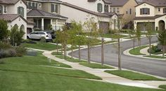 Newsela   Plants supplant grass on Calif. lawns due drought