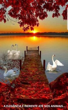 Autumn scenery - A beautiful capture of Nature & Sunset Credits to the Photographer Beautiful Nature Wallpaper, Beautiful Landscapes, Beautiful World, Beautiful Images, Beautiful Photos Of Nature, Beautiful Scenery, Landscape Photography, Nature Photography, Photography Lighting
