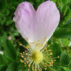 Pink gear petal flower