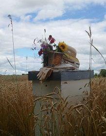 Beehive in field