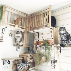 Check 50 unique pet-friendly interior designs for pet owners for their adorable pets rest places. Animal Room, Design Diy, Interior Design, Cat House Diy, Cat Shelves, Cat Playground, Cat Room, Pet Furniture, Cheap Furniture