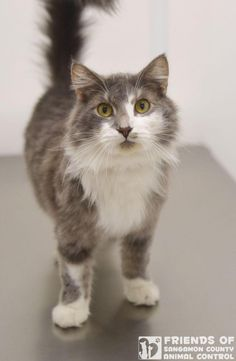 Adopt Fritz - Springfield, IL - $31 fully vetted