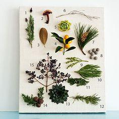 guide to foraged plants for succulent boxes       lavender     wild mushroom     magnolia leaf     kumquat     echeveria     birch twig     pine     berzelia     berzelia     sequoia     juniper     rosemary     echeveria     juniper     privet