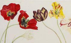 Tulips in a Sunderland Jug (detail) bu Elizabeth Blackadder Watercolor Mixing, Watercolor Disney, Watercolor Flowers, Natural Form Artists, Natural Forms, Paintings I Love, Flower Paintings, Painting Flowers, Blackadder