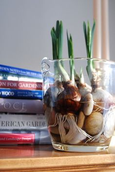 To grow paperwhites with stones, anything will do. It's fun to use interesting vessels, like this ice bucket, which displays the impressive root growth around the supporting stones.The water should come just to the base of the bulbs. In about two to three weeks, they'll bloom and fill your home with a fresh, sweet scent. Hyacinth bulbs can also be easily grown in water.