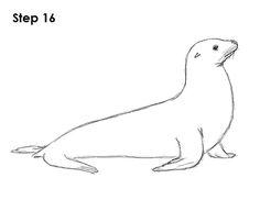 Seal Drawing 16