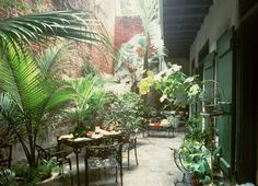 Fabulous courtyard, Governor Nichols St., New Orleans French Quarter...I could live out here!