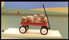 Purina's Beneful cleverly uses dogs in their latest ad, 'Dog Goldberg Machine'. The ad features a Rube Goldberg Machine powered by dogs and their favorite toys and has been seen over million times this week. Funny Animals, Cute Animals, Rube Goldberg, Little Dogs, Play, Dog Love, Dogs And Puppies, Doggies, Puppies
