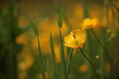 Les petites fleurs sauvages le long de la côte irlandaise...   #flowers #fleur #ireland #irlande #alainntours #nature  © Unsplash