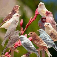 little birds. Rare Birds, Exotic Birds, Colorful Birds, Different Birds, Kinds Of Birds, Pretty Birds, Beautiful Birds, Animals And Pets, Cute Animals