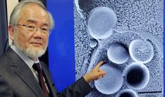 """Yoshinori Ohsumi, a cellular biologist from Japan, became a Nobel Prize winner in physiology and medicine """"for discovering the mechanisms of autophagy."""" The Japanese scientist has scientifically substantiated that fasting is good for one's. Benefits Of Stretching, Professor, Nobel Prize Winners, Ayurveda, Biologist, Life And Death, Physiology, Natural Remedies, Health And Fitness"""