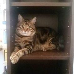 #buongiorno dal #gatto #goodmorning #cat #colazione #breakfast #mummi #mercoledi #love