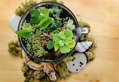 Beautiful Terrarium Ideas What Is A Terrarium? A terrarium is essentially an enclosed environment for growing plants. Small Water Gardens, Indoor Water Garden, Backyard Water Feature, Indoor Plants, Water Terrarium, Terrarium Diy, Terrarium Decorations, Hydroponic Gardening, Hydroponics