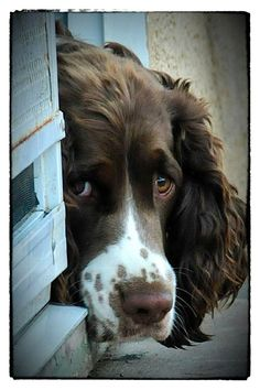 A dog is the only thing on earth that loves you more than he loves himself...Josh Billings