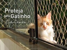 Gatos são muito curiosos e têm o instinto de caça aguçado. Adoram brincar, escalar e pular. E quando se cansam querem relaxar tomando um banho de sol e sentir o ar fresco. Por isso, instale nossas redes de proteção e ofereça segurança permanente para seus bichinhos.  #rededeproteção #telanajanela #gatos #gato #curitiba #cuidado #carinho #amor #redesdeproteção #janela