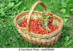 wild strawberries - Google keresés