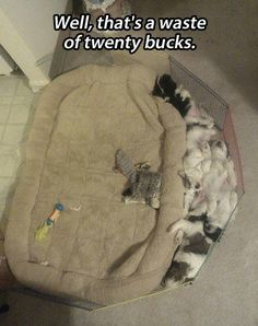My dog does the same thing with her bed I bought her.