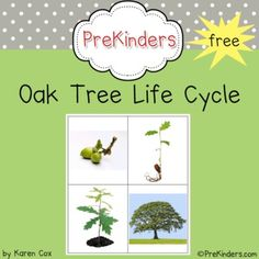 This set teaches the life cycle of an oak tree. These are a great addition to a thematic unit on the Forest or Trees. Great for use in a science ce...