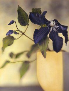 Resultado de imagem para Brigitte Carnochan butterflies
