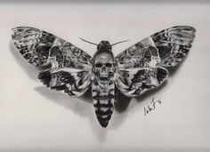 "12.6k Likes, 39 Comments - World of Pencils (@worldofpencils) on Instagram: ""Death Moth! Charcoal drawing by artist @leila_blackcatink #pencilart #pencildrawing #charcoal…"""
