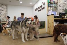 Dog Café, Korea