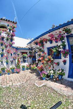 Patio de la calle Trueque, 4.- El patio está completamente adornado por macetas de color azul intenso, que contrastan con el blanco de las paredes y los colores de las plantas.