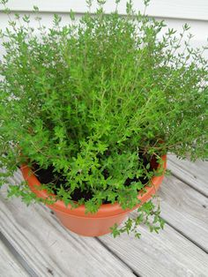 Thyme: Thyme can adjust itself to partial sun and if you can provide 5 hours of sunlight daily, growing thyme indoors is possible. Best Herbs To Grow, Growing Herbs Indoors, Herb Garden In Kitchen, Types Of Herbs, Garden Show, Garden Web, Indoor Plants, Indoor Herbs, Herb Plants