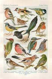vintage book illustrations birds - Google Search