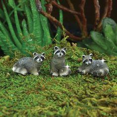 fairy garden raccoon, miniature racoon, miniature garden raccoons, terrarium…