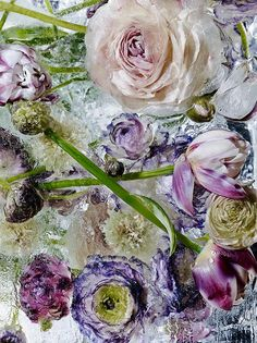 Fresh flowers are an instant mood booster, and after spotting Kenji Shibata's photo project , I'm positive that they also have ma. Birds In The Sky, Photo Projects, Fine Art Photography, Flower Photography, Love Flowers, Love Art, Watercolor Flowers, Beautiful Images, Ethereal