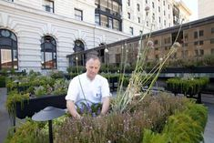 Chef Foster Tending to his Rooptop Garden http://gardenista.com/posts/a-chefs-secret-roof-garden-the-fairmont-hotel at The Fairmont San Francisco