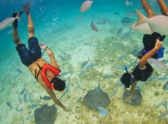 Bucket List...visit Cozumel in #Mexico via @Expedia