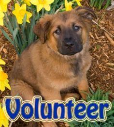 6. Volunteer at an animal shelter.